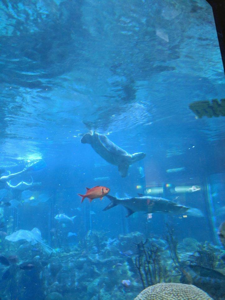nickel the turtle shedd aquarium
