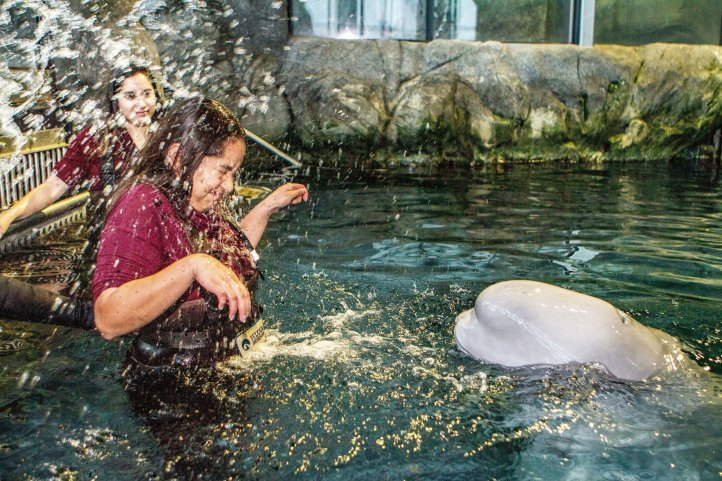 A Splash from Kimalu at the Shedd