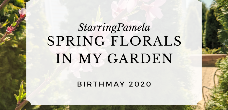 spring florals in my garden featured image