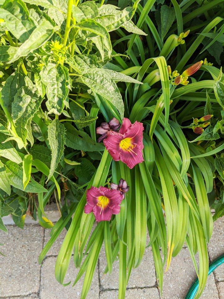 summer florals in my garden