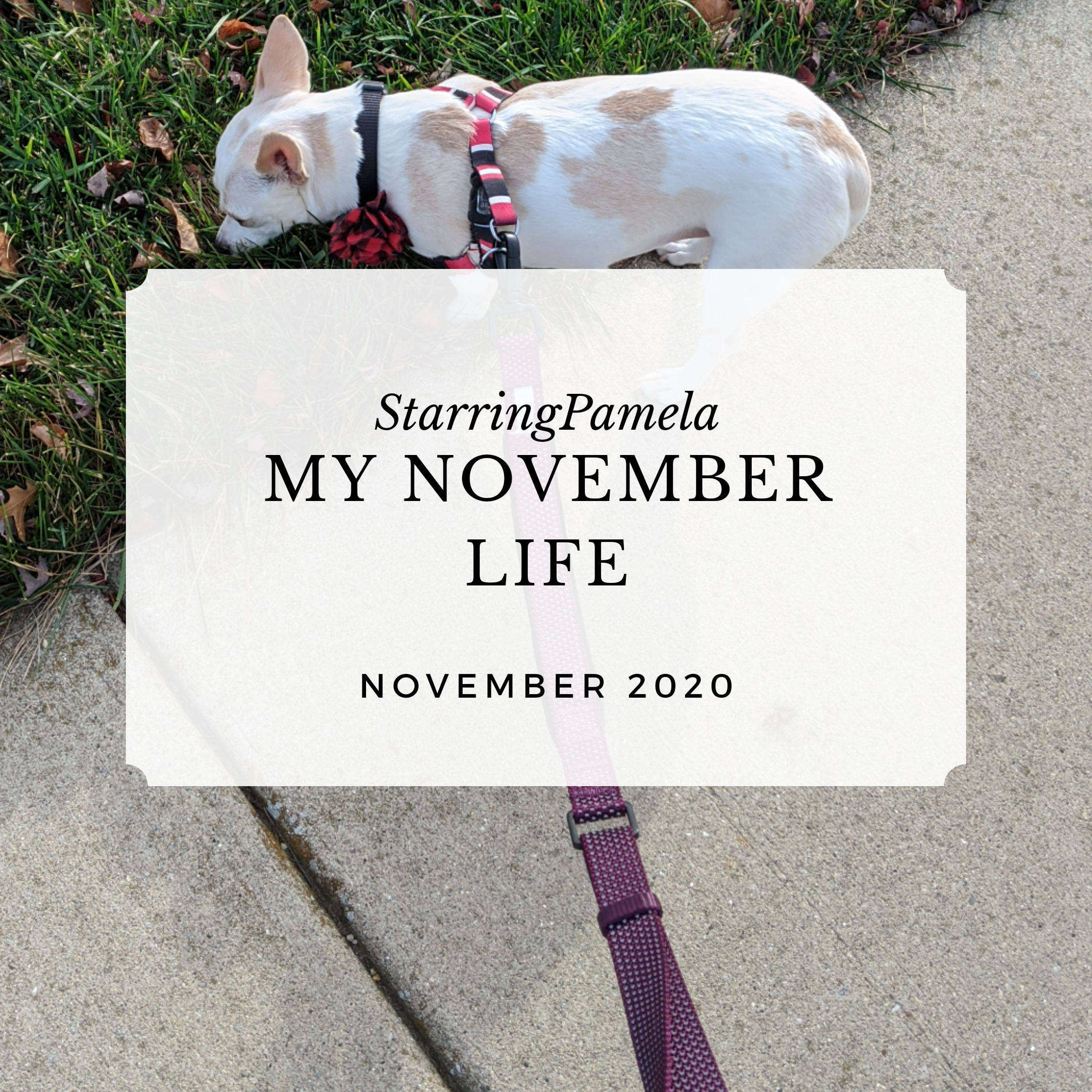 my november life featured image