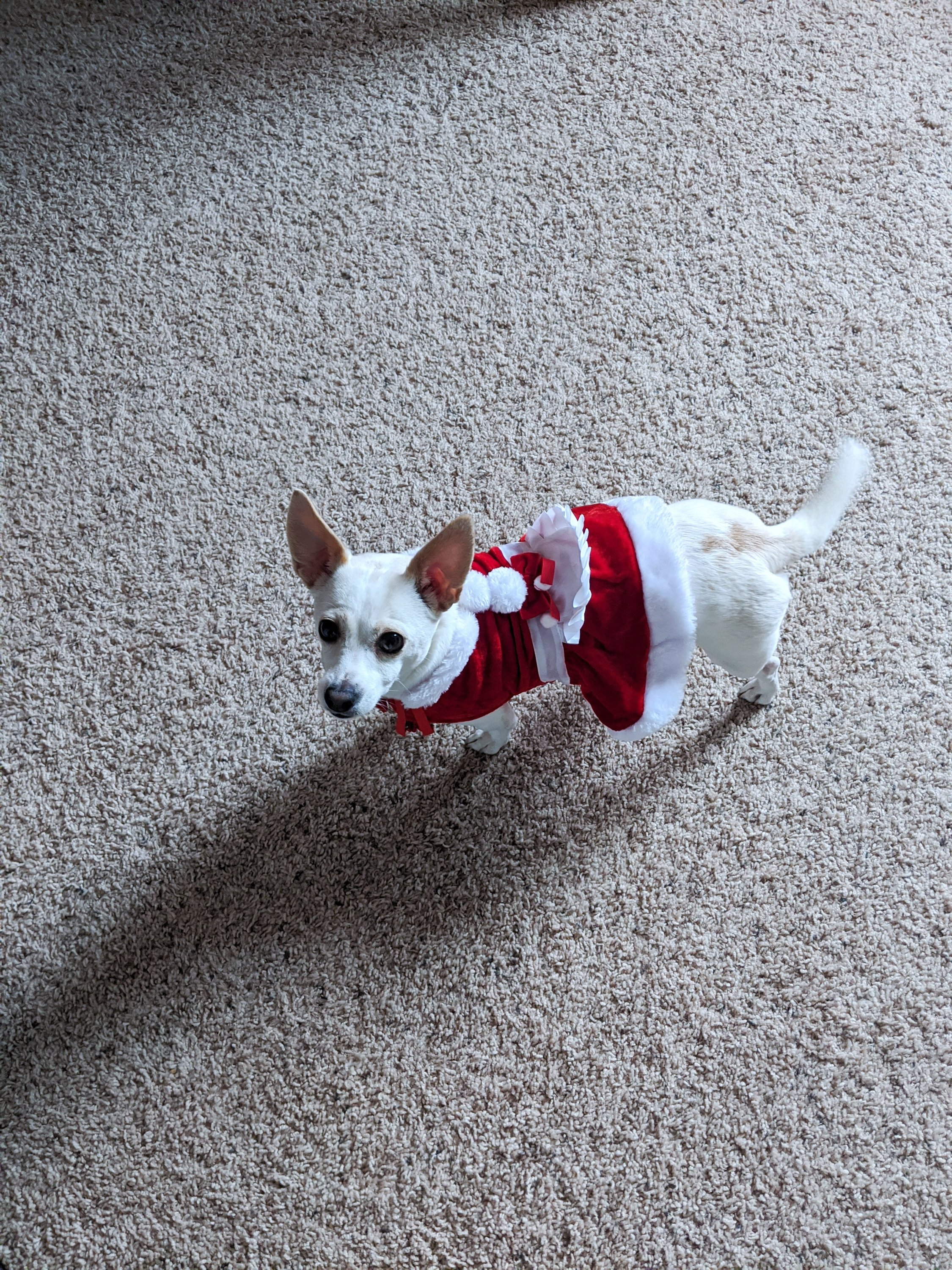 arya's christmas outfits mrs. claus