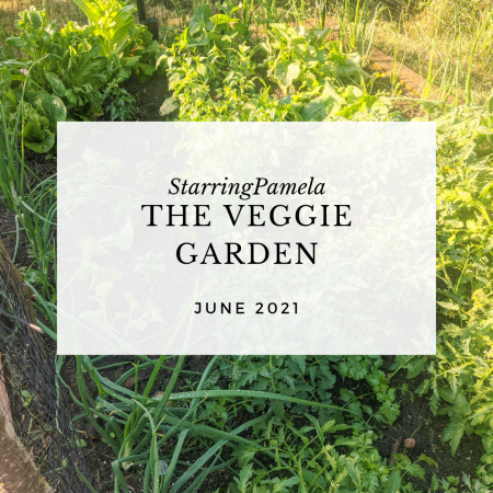 veggies in my garden featured image