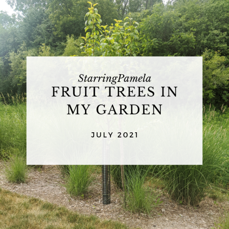 fruit trees in my garden featured image