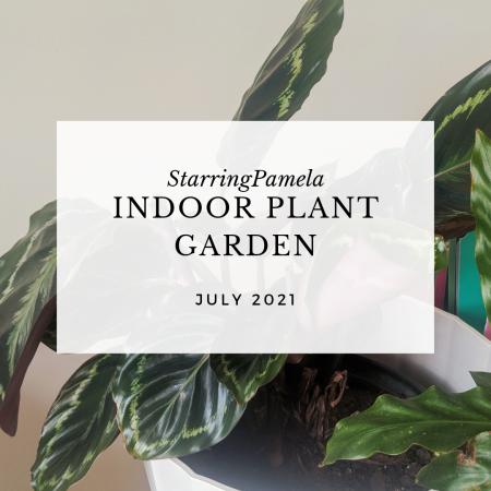 indoor plant garden featured image
