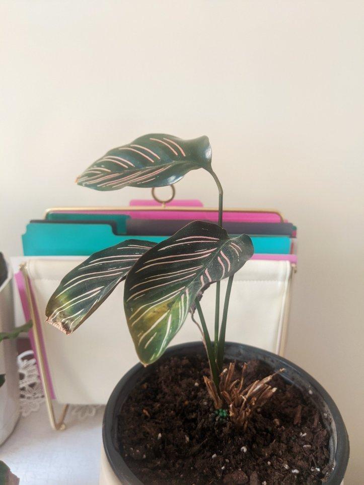 indoor plant garden glinda
